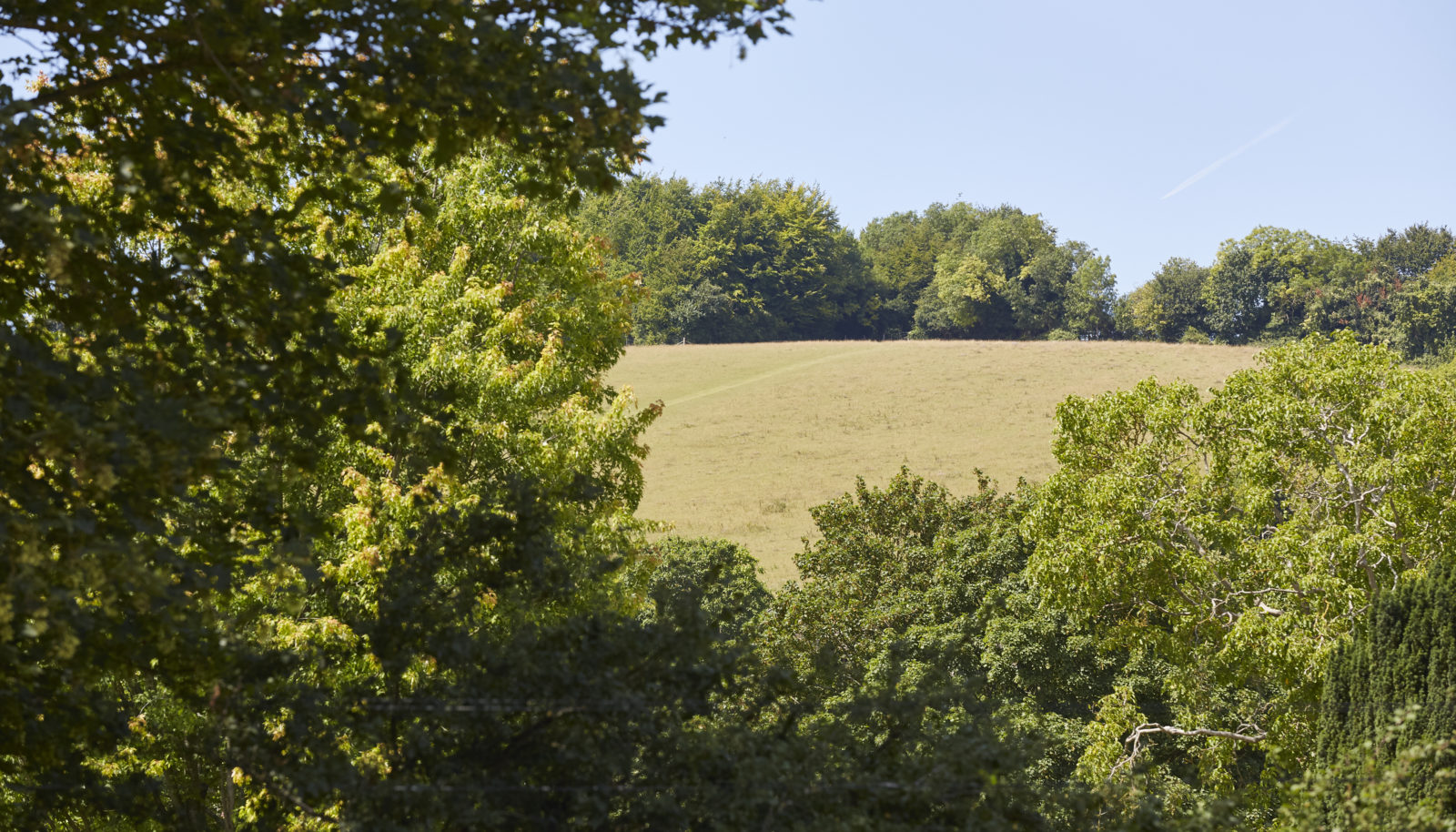 lardon chase view